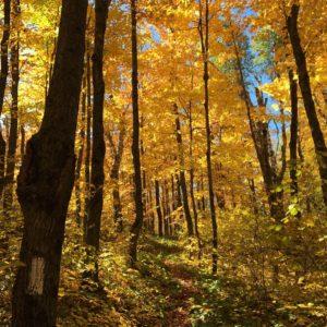 Fall colors on Fantasia Overlook hike